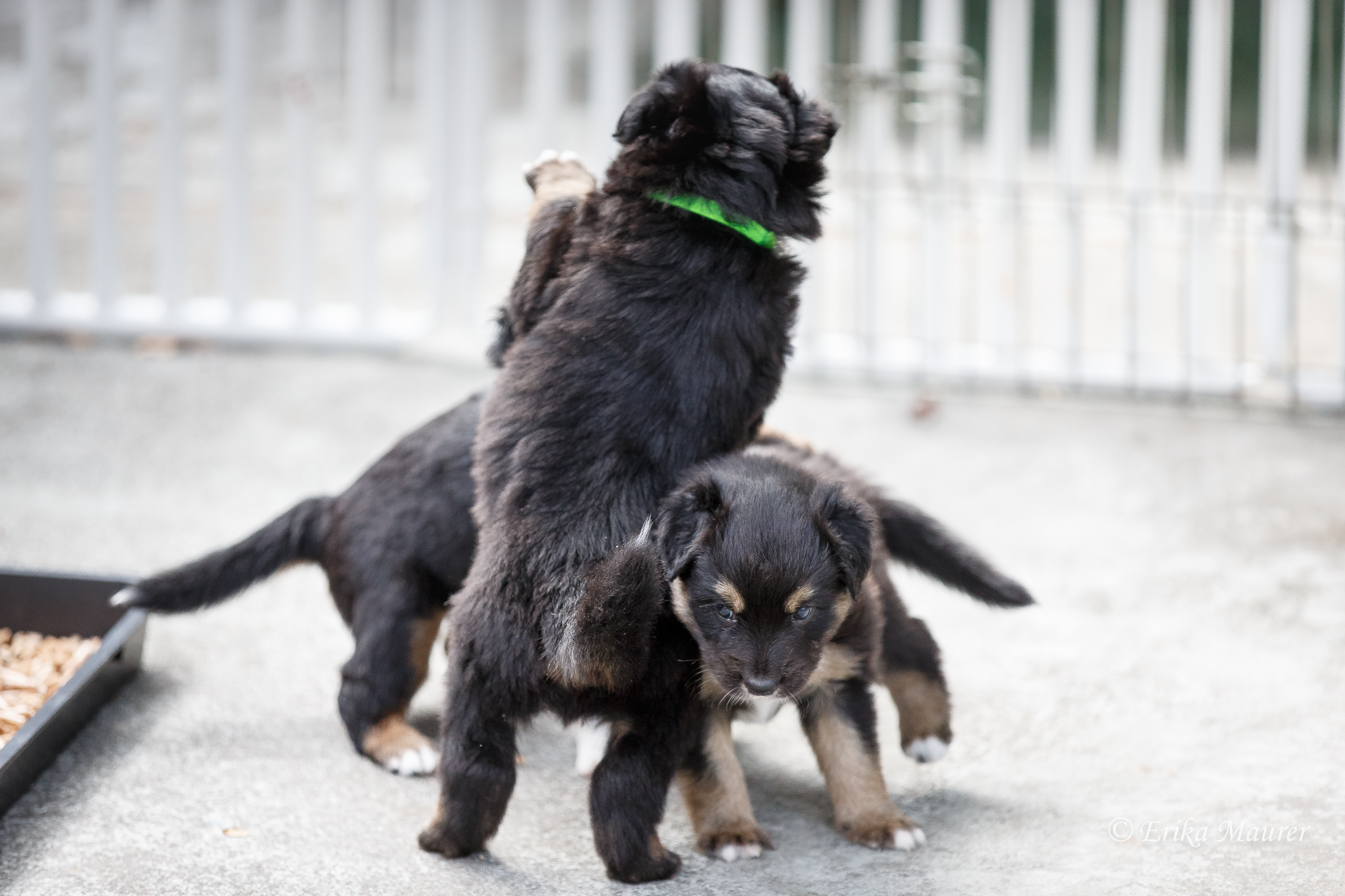 Pups10-28-6.jpg