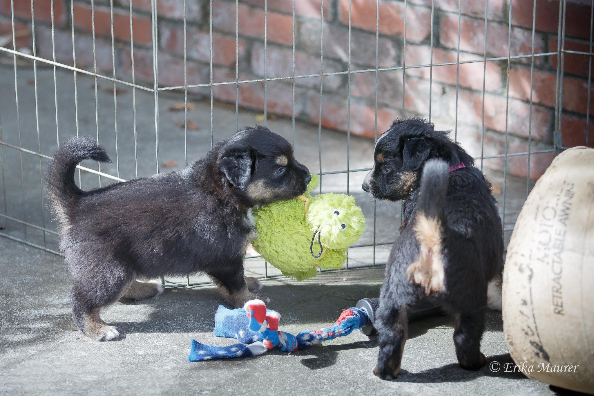 Pups10-28-3.jpg