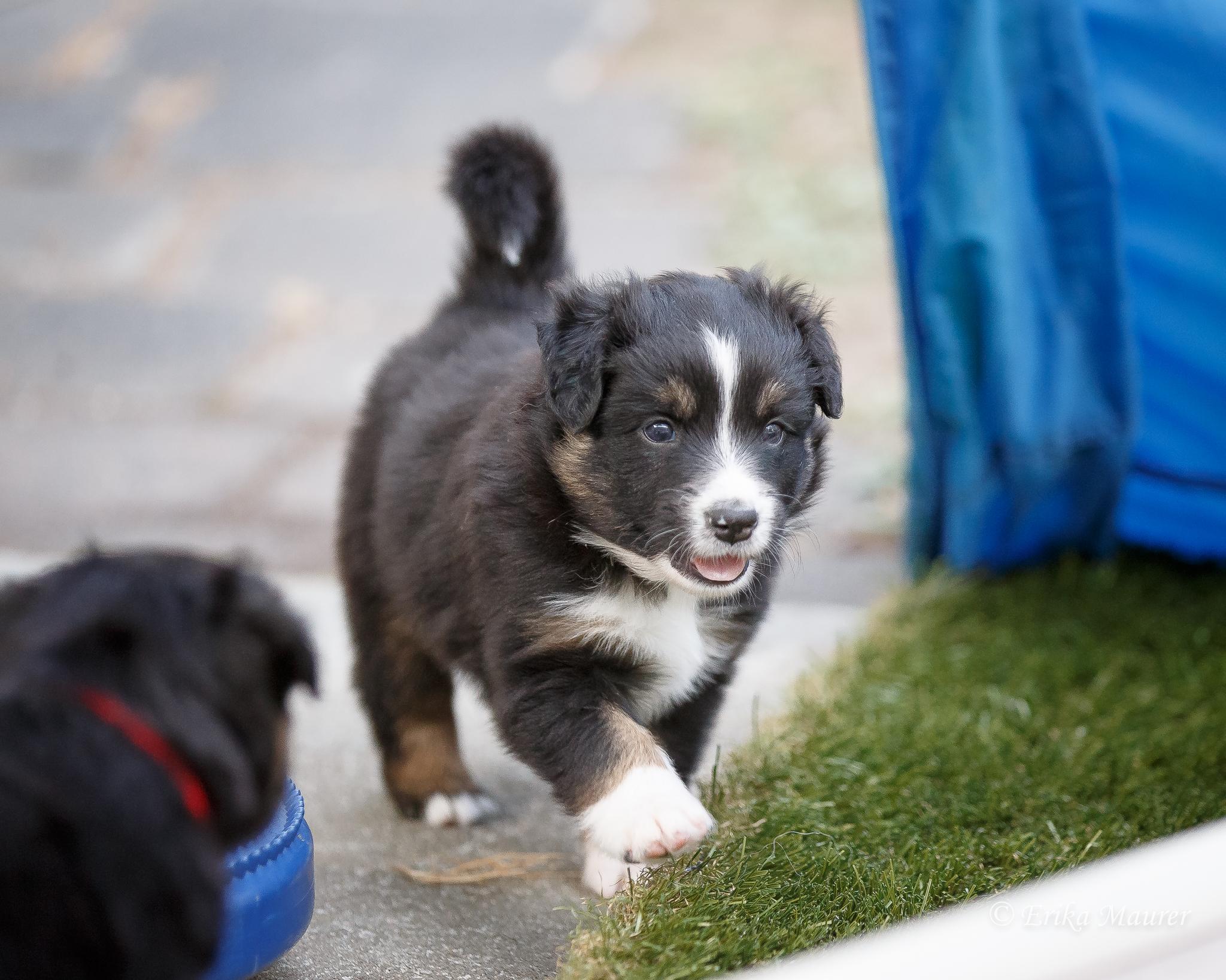 Pups10-28-4.jpg