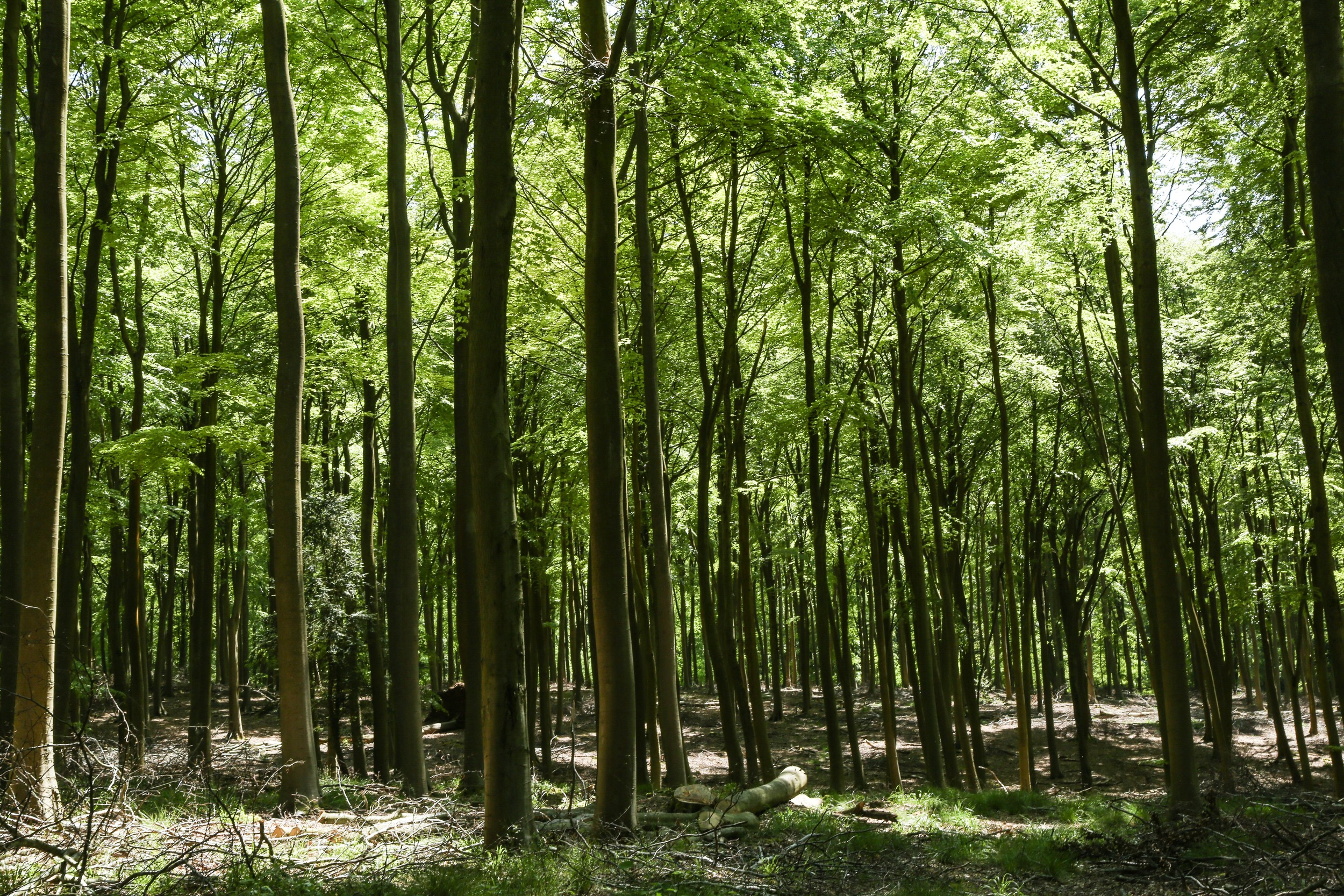 Blackwood Forest in Hampshire