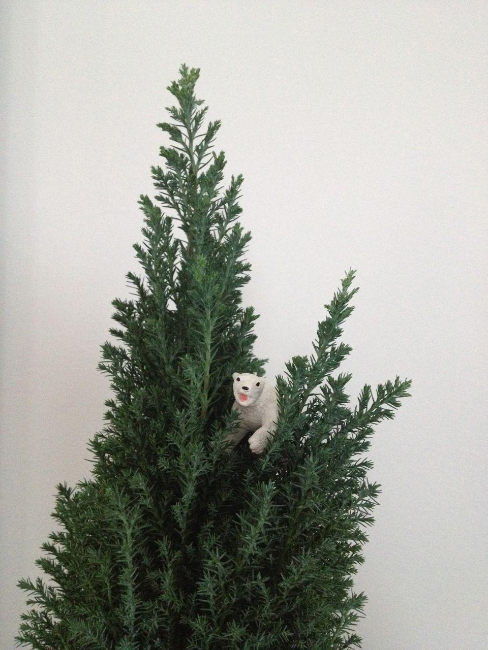 climbing-evergreen