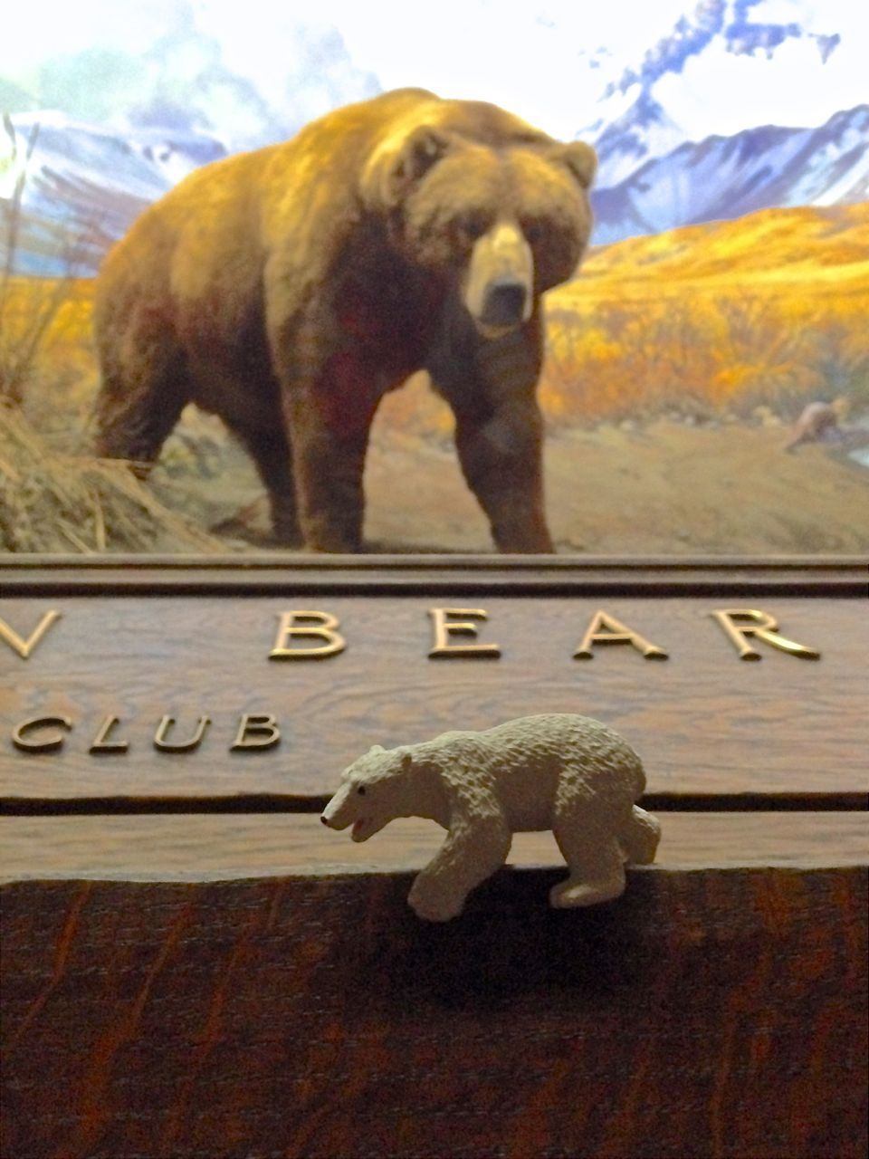 bear-club