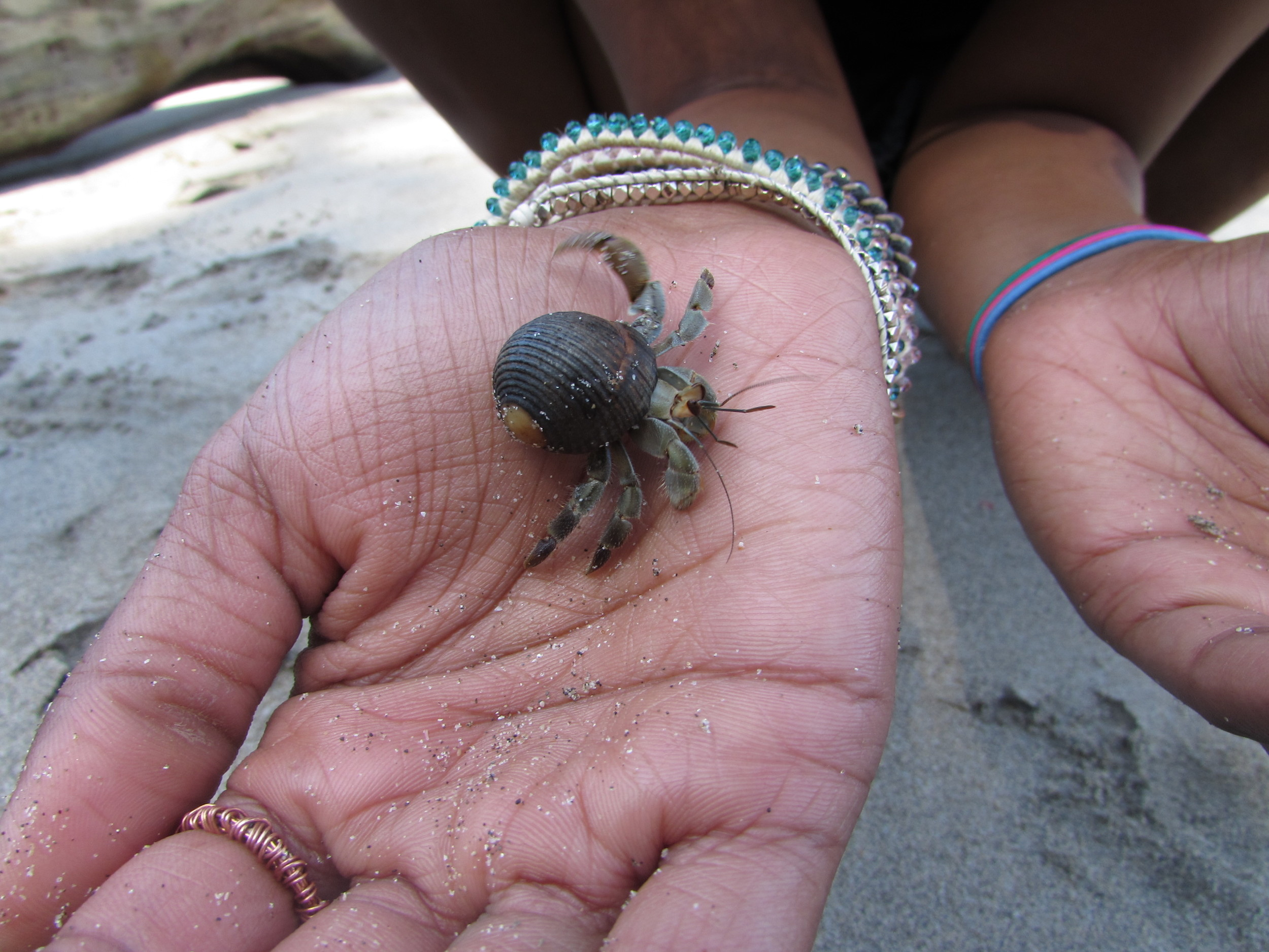 Baby crab on the beach