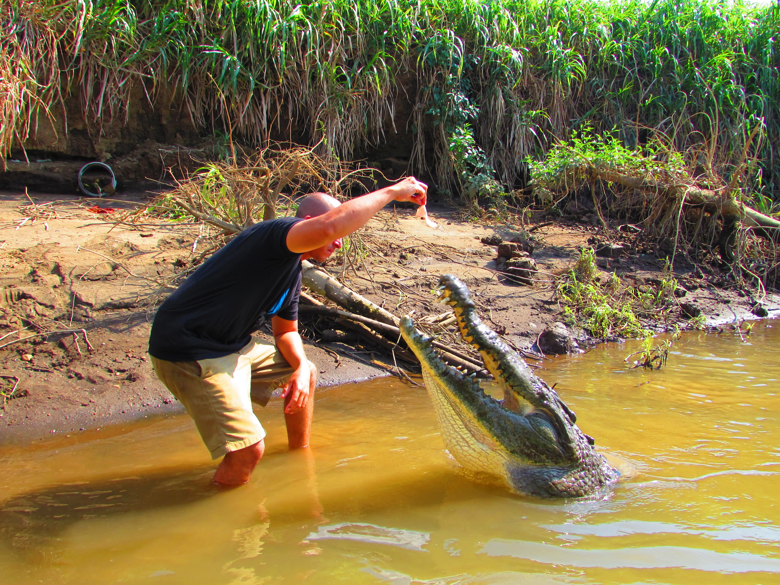 There he goes again with feeding those crocs!