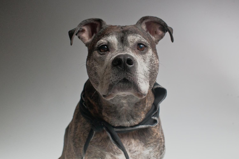Pet Portraits - Old Dog