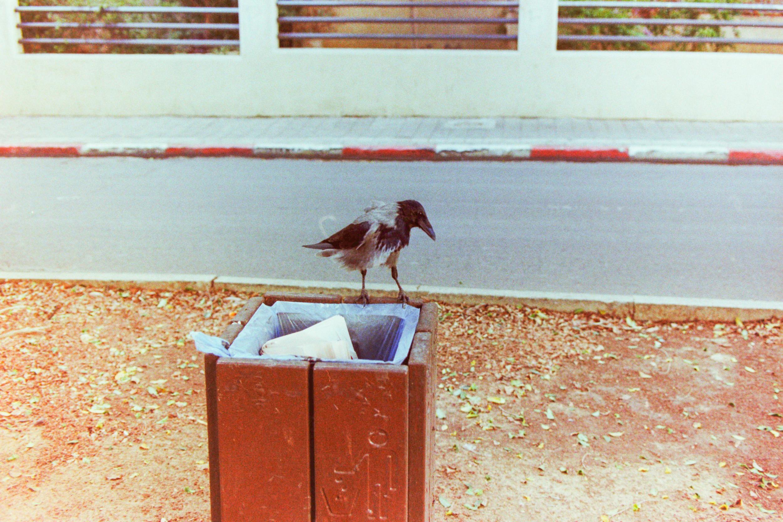 Making friends in Tel Aviv