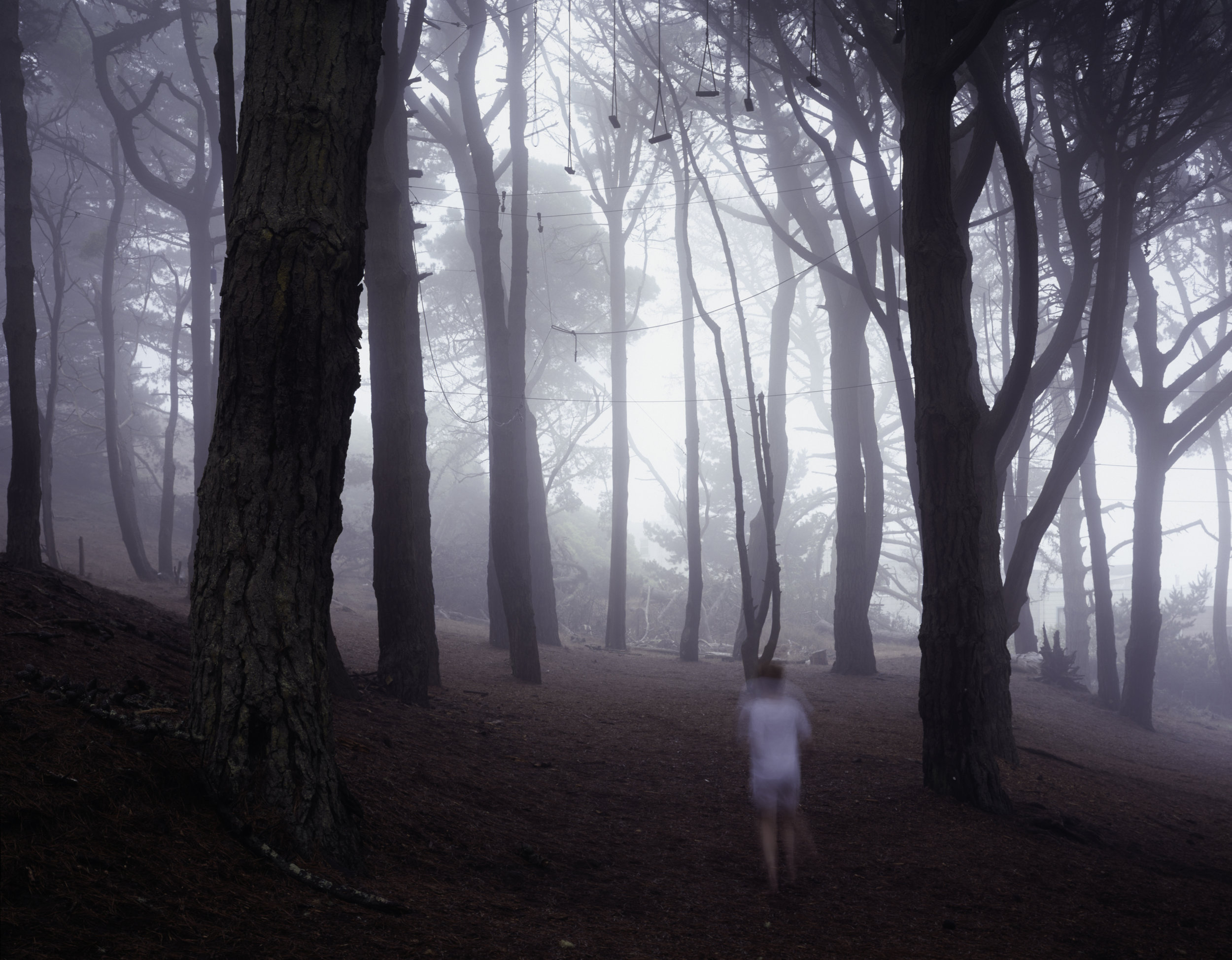 The Woods  • 28 X 36 • photographs on fabric // dual layered •  $1,500