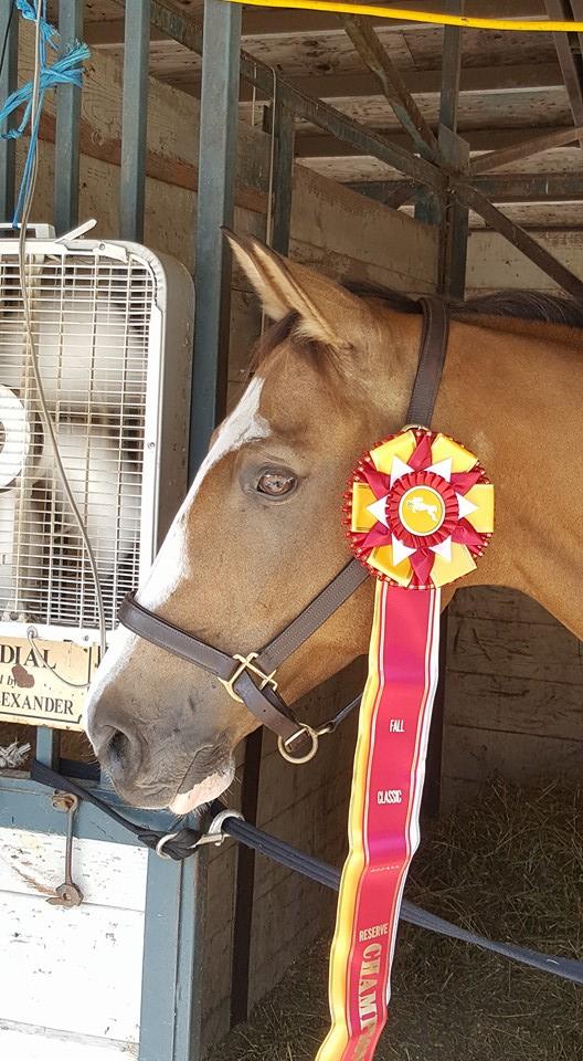 Intermediate Adult Hunter Reserve Champion!!!