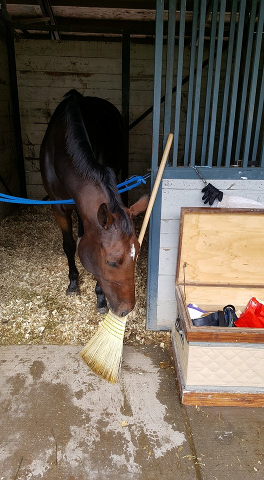 Bring me hay or the broom is going to get it!