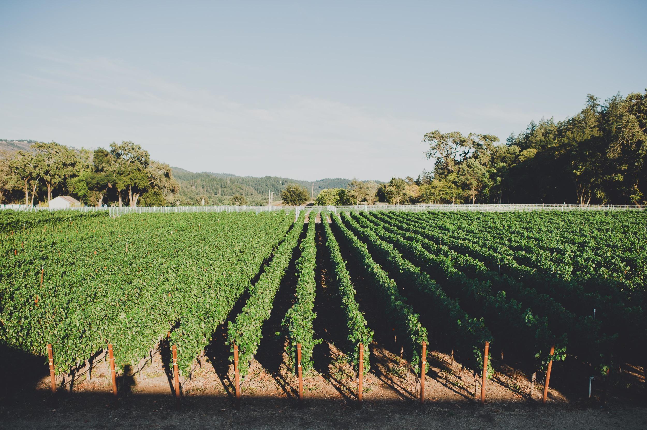 Madrigal Vineyards-212_1.jpg