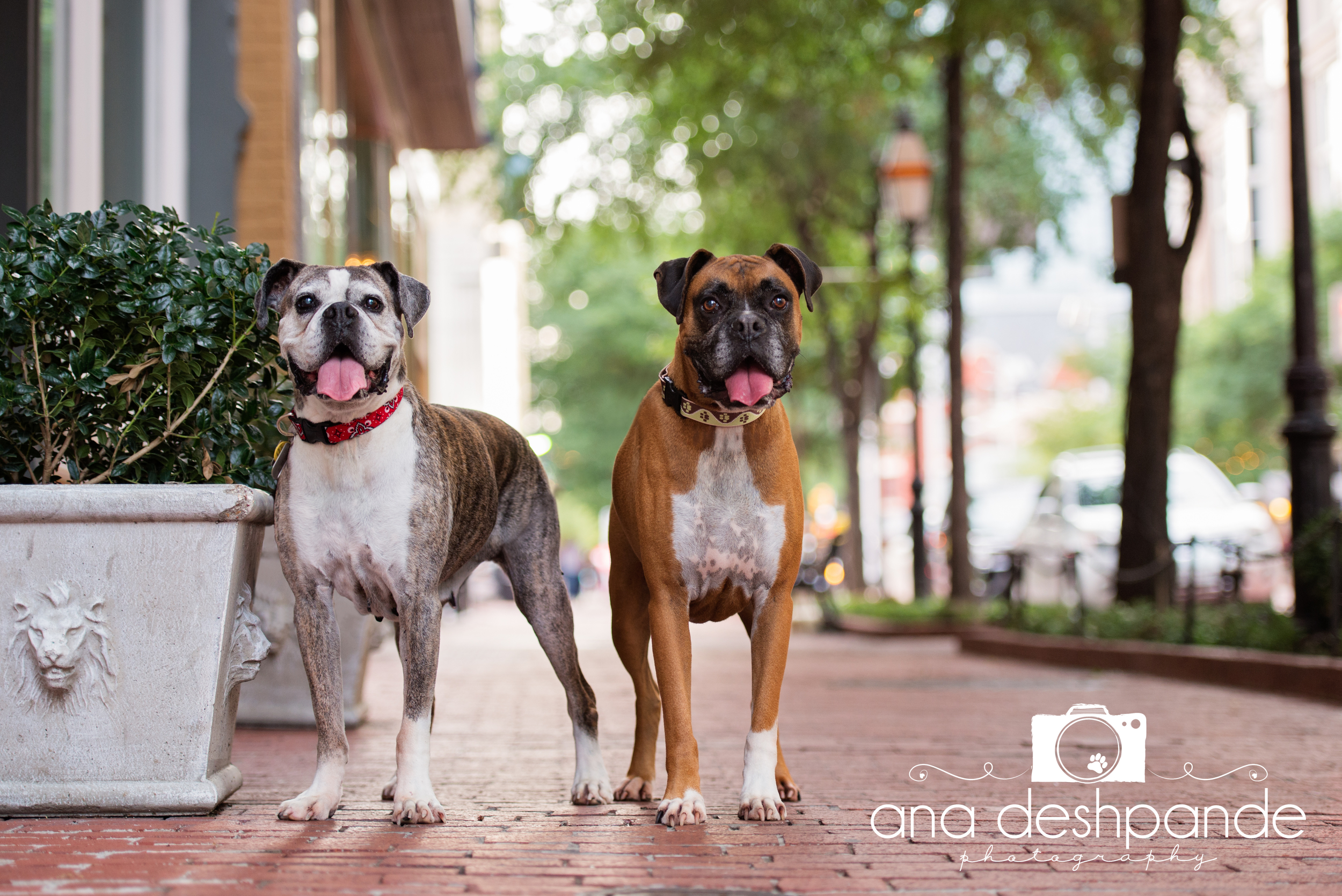 Penelope and Bandit showed me around downtown Fort Worth. Their sweet faces will be smiling at you throughout the month of February.