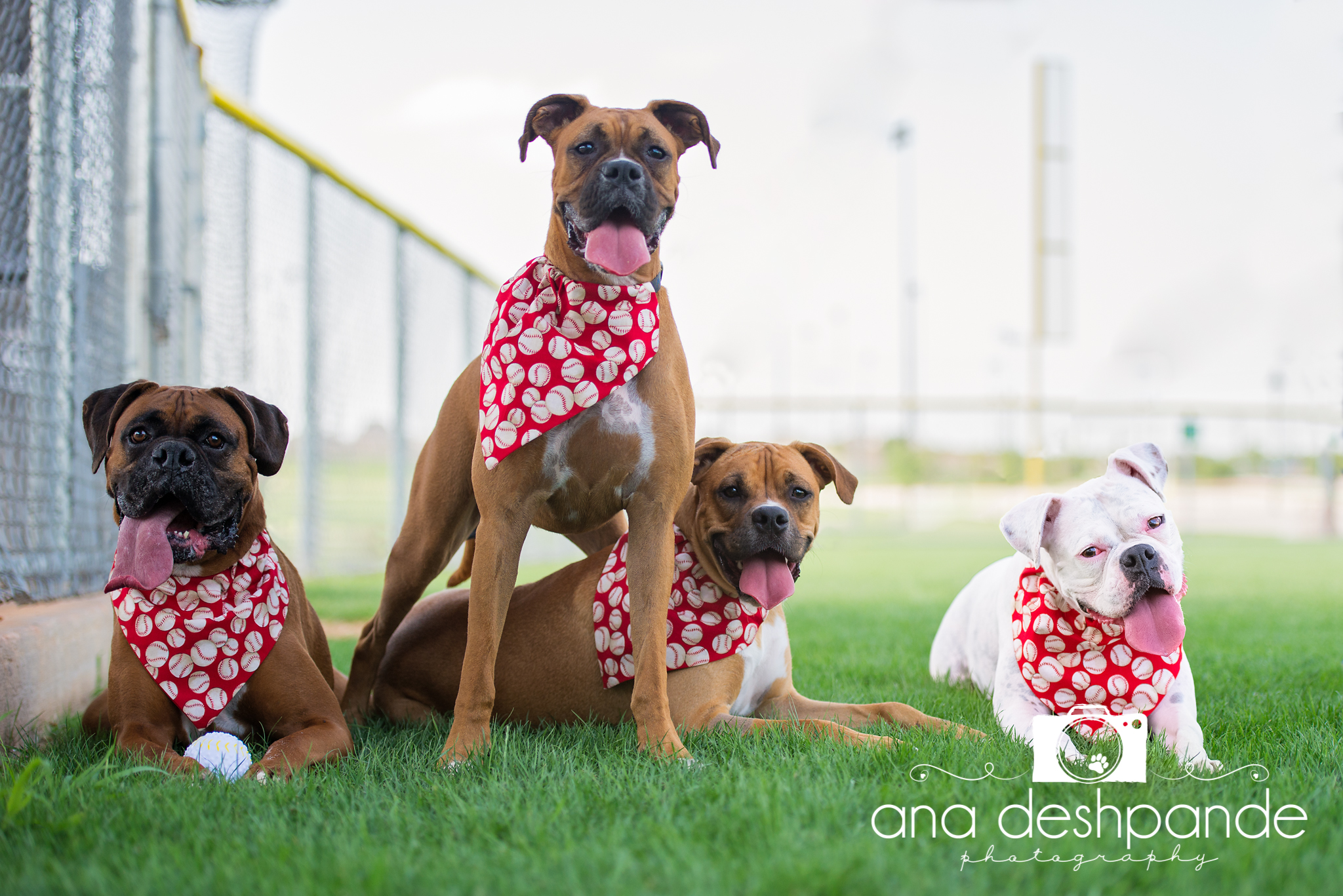 Windsor, Dazzle, Ro and Colbie wanted a baseball themed photograph and that's what they got! They will be playing ball all through the month of June.