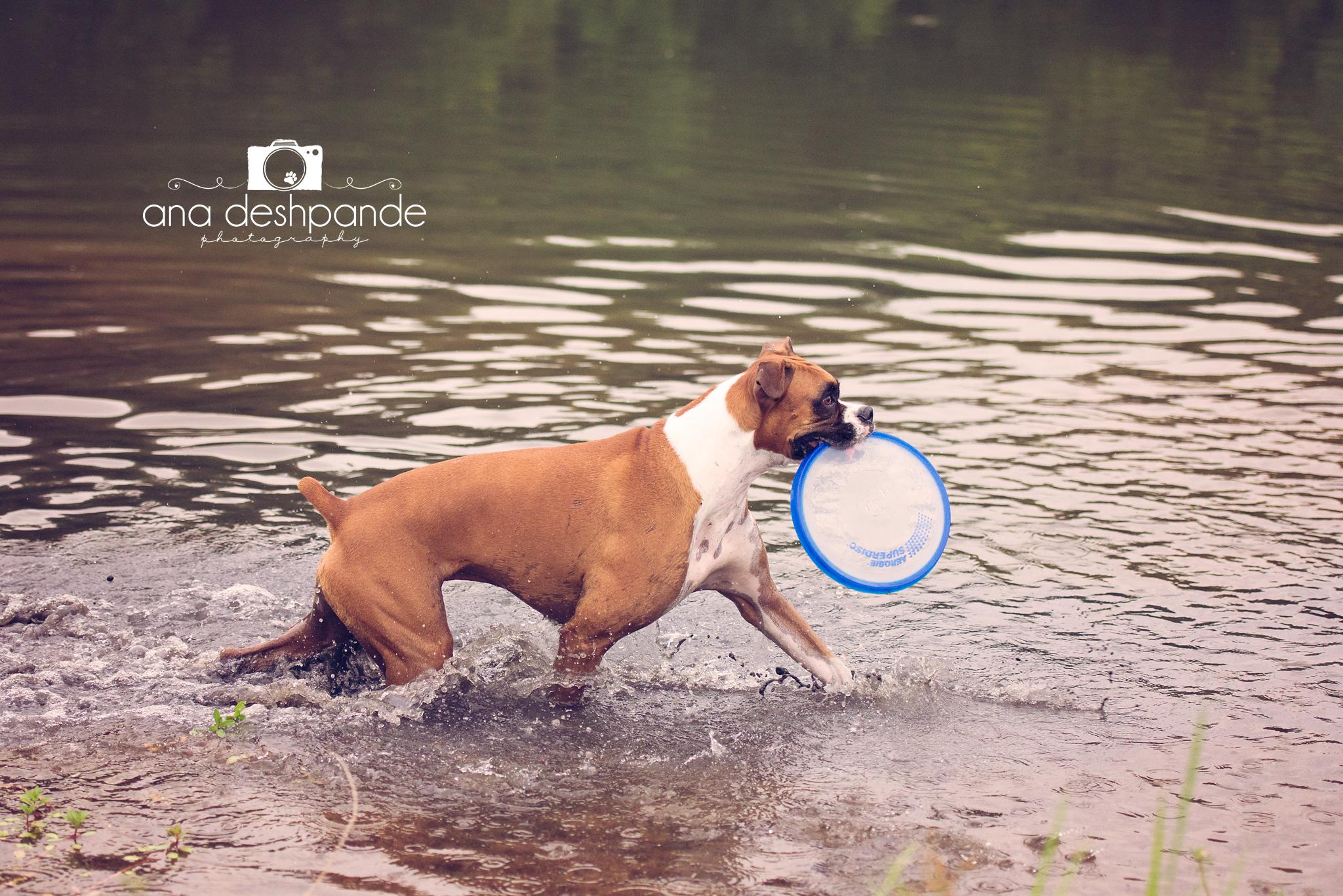 Wherever I go, the frisbee goes.