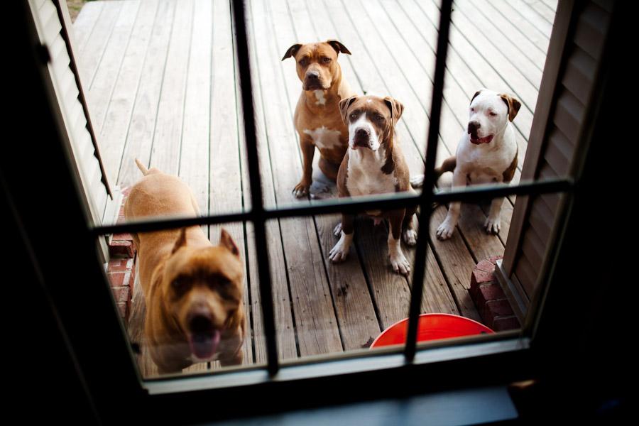 dogs-in-windows-001
