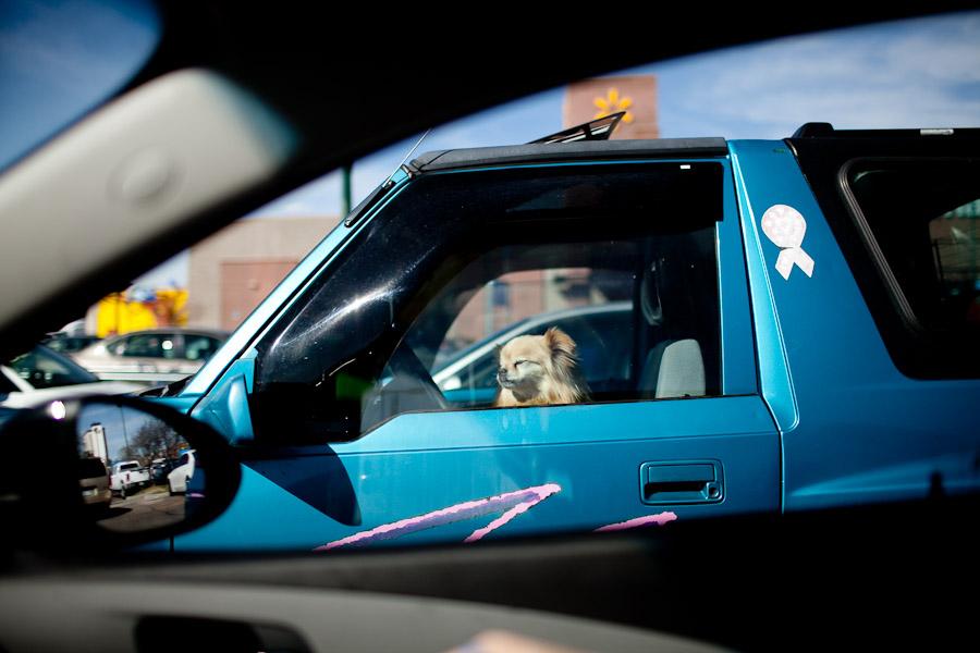 dogs-in-windows-003