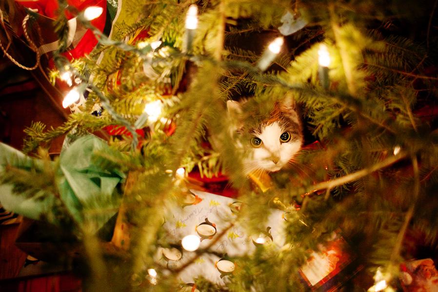 christmas-boston-006.jpg