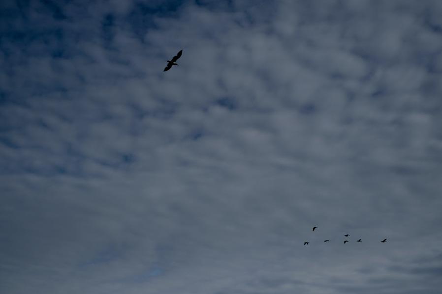 orcas-island-11