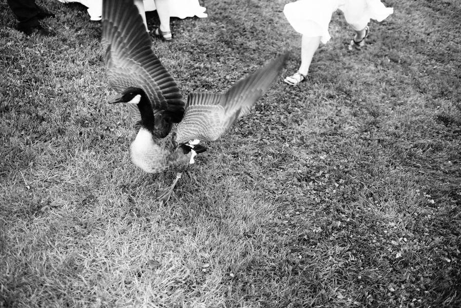 vermont-backyard-wedding-0026.jpg