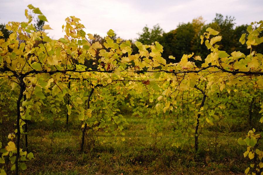 Shelburne-Vineyards-Vermont-Wedding-0001.jpg