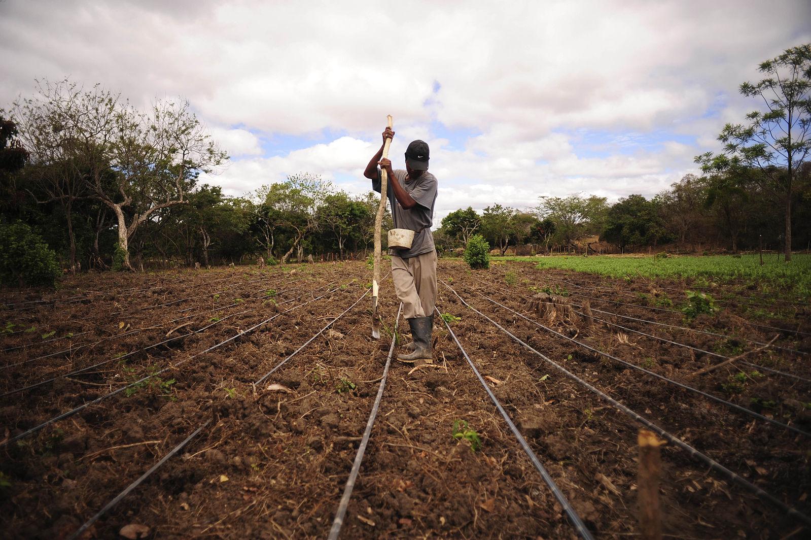 Farmer_works_a_field_of_beans,_Nicaragua.jpg