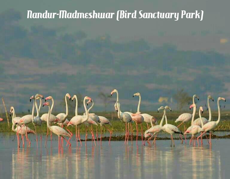 Nandur madmeshvar Bird sanctuary park | Nashik wine tour |
