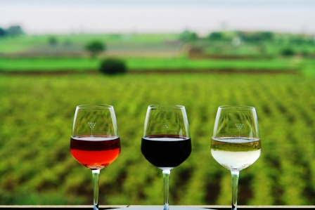 Nashik wine tour | Wine glasses at york winery tasting room
