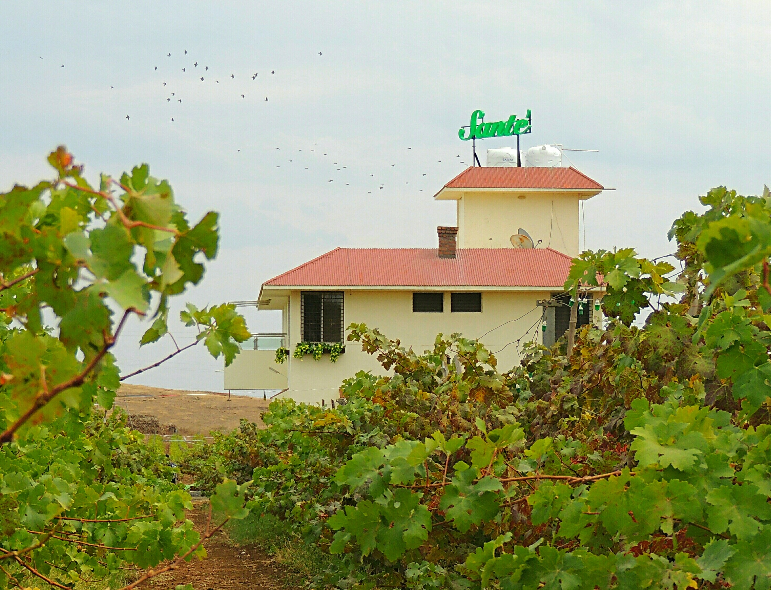 Nashik wine tour | Sante vineyard resort by vinsura winery