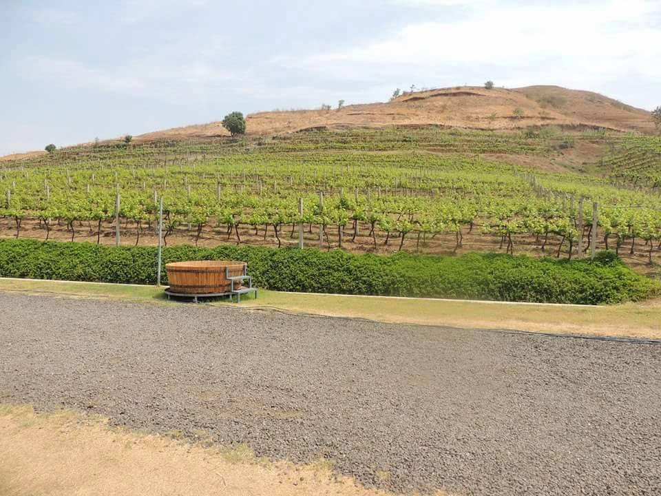 Nashik wine tour by Red Grapes