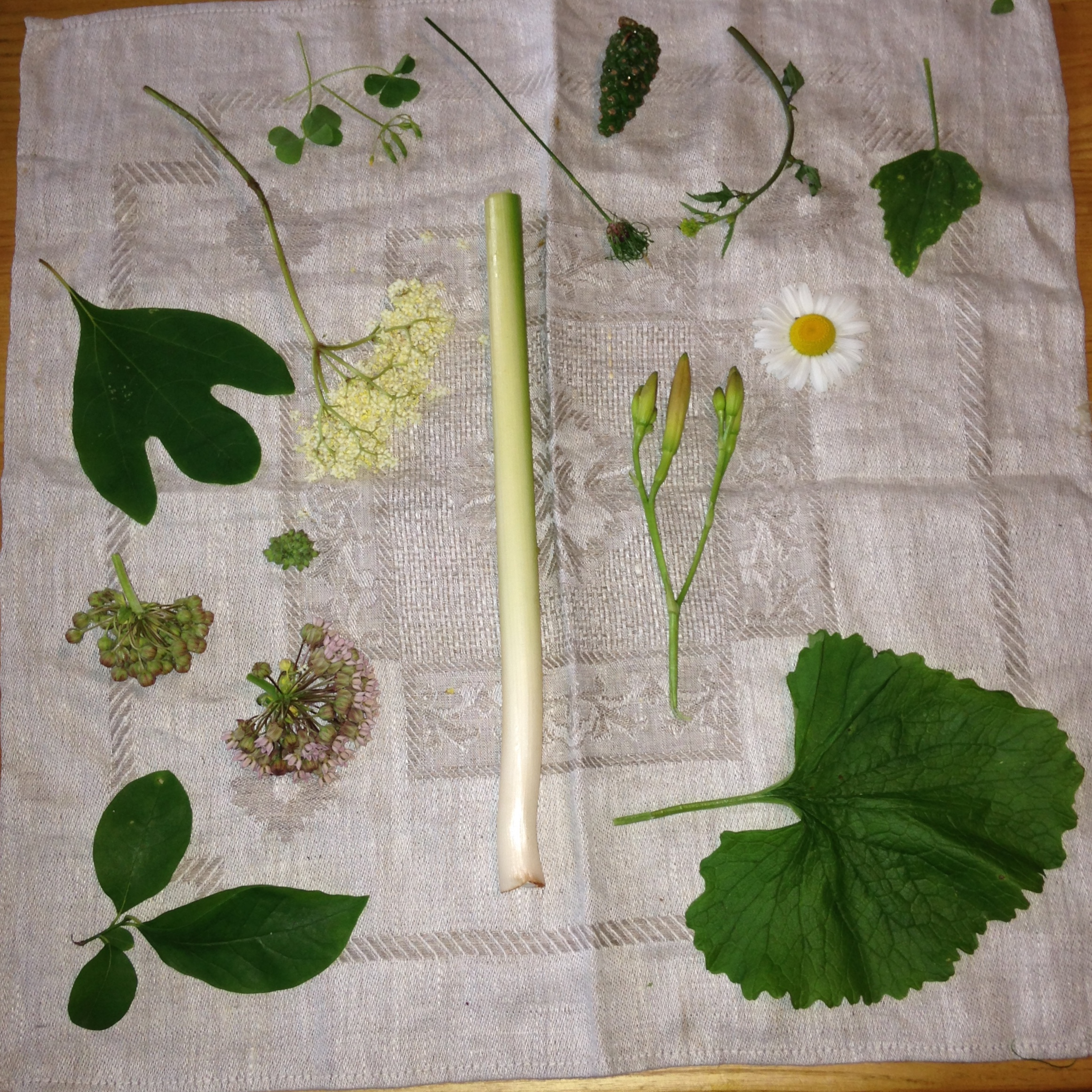 Left to right: Sassafras, Elderberry flower, Wood Sorrel, Garlic Scape seedhead, Pine cones, Wild mustard, Lamb's Quarters leaves, Milkweed buds, Cattails shoots, Daylily buds, Oxeye Daisies, Spicebush leaves and twigs, Garlic Mustard leaves