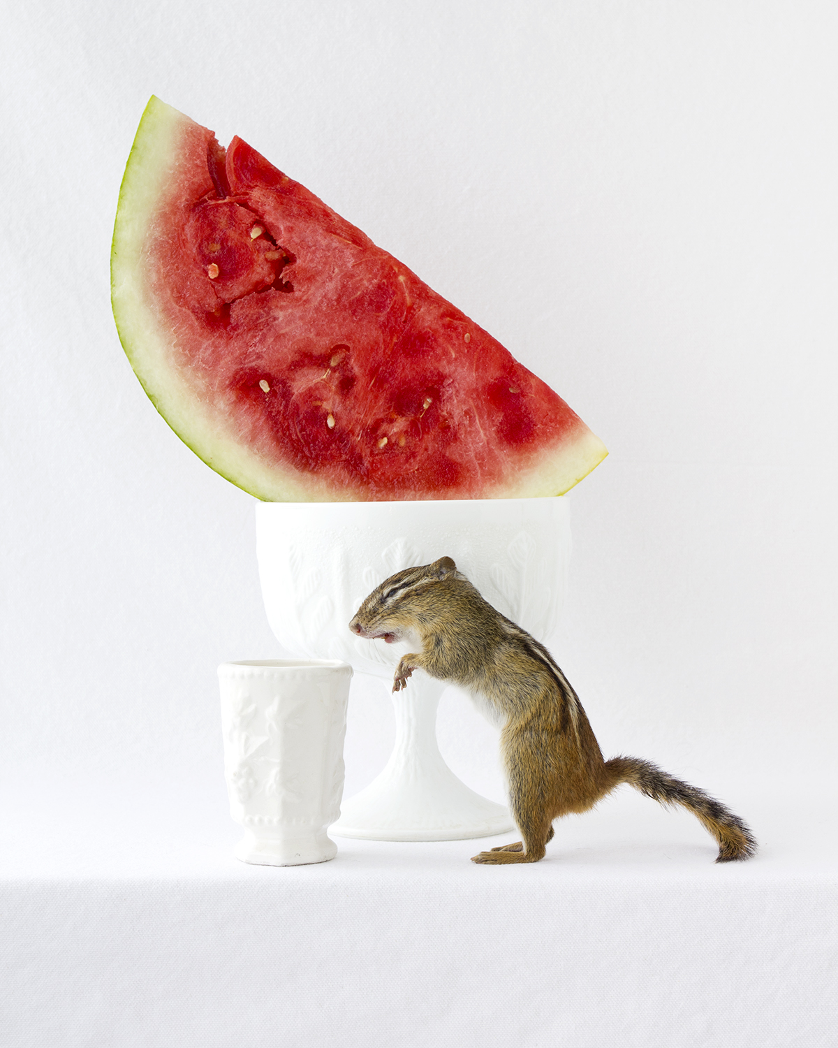 Witham_WatermelonChipmunk.jpg