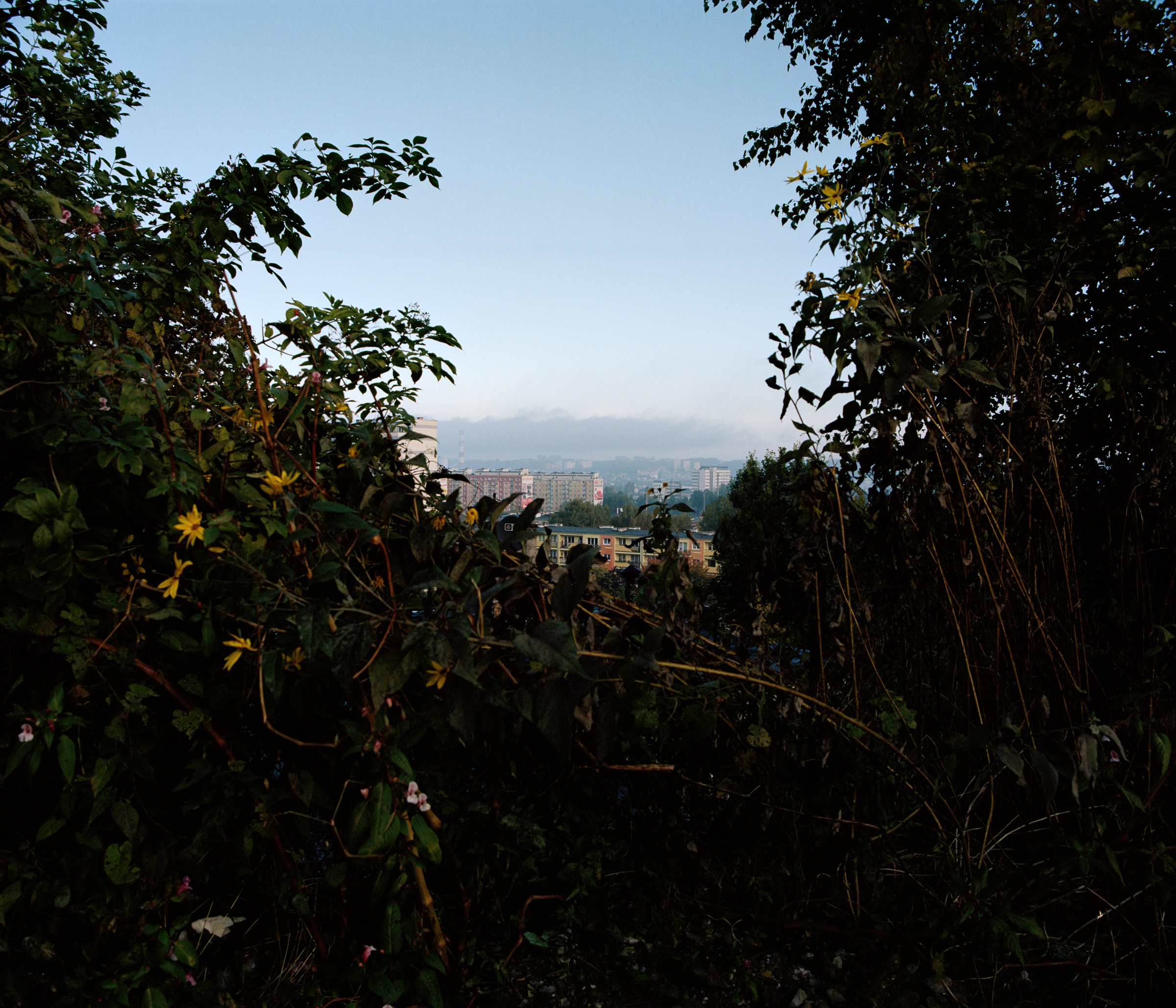 view thru bushes.jpg