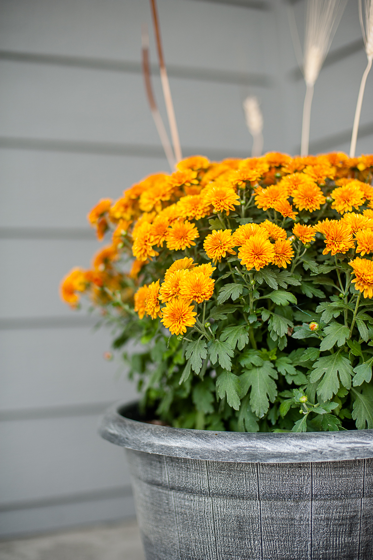 Flowers on Hanson porch-4x6-8190.jpg