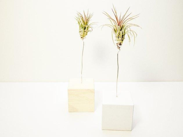 Air Plant Trees - Hunker.com