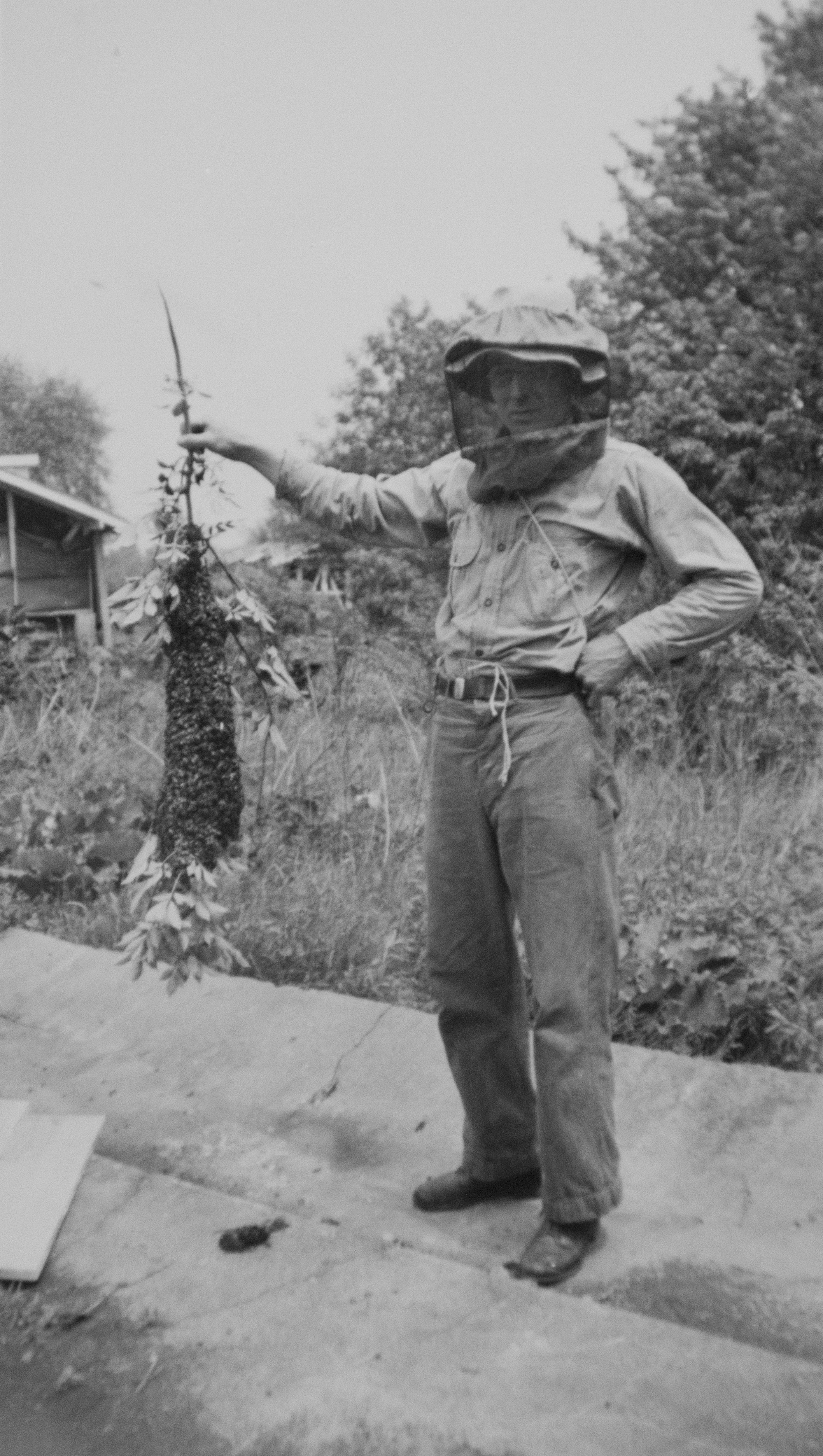 George Sr., wearing his bee veil and other beekeeping equipment,stands with a colony of bees on a tree branch. (Archive)