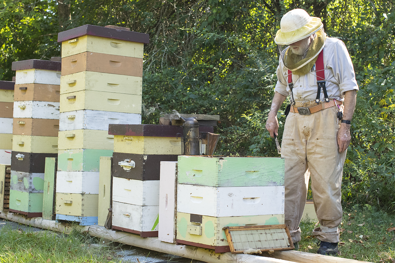 George observes his hives at his bee yard in Chaplin, Connecticut. (Jackson Mitchell)