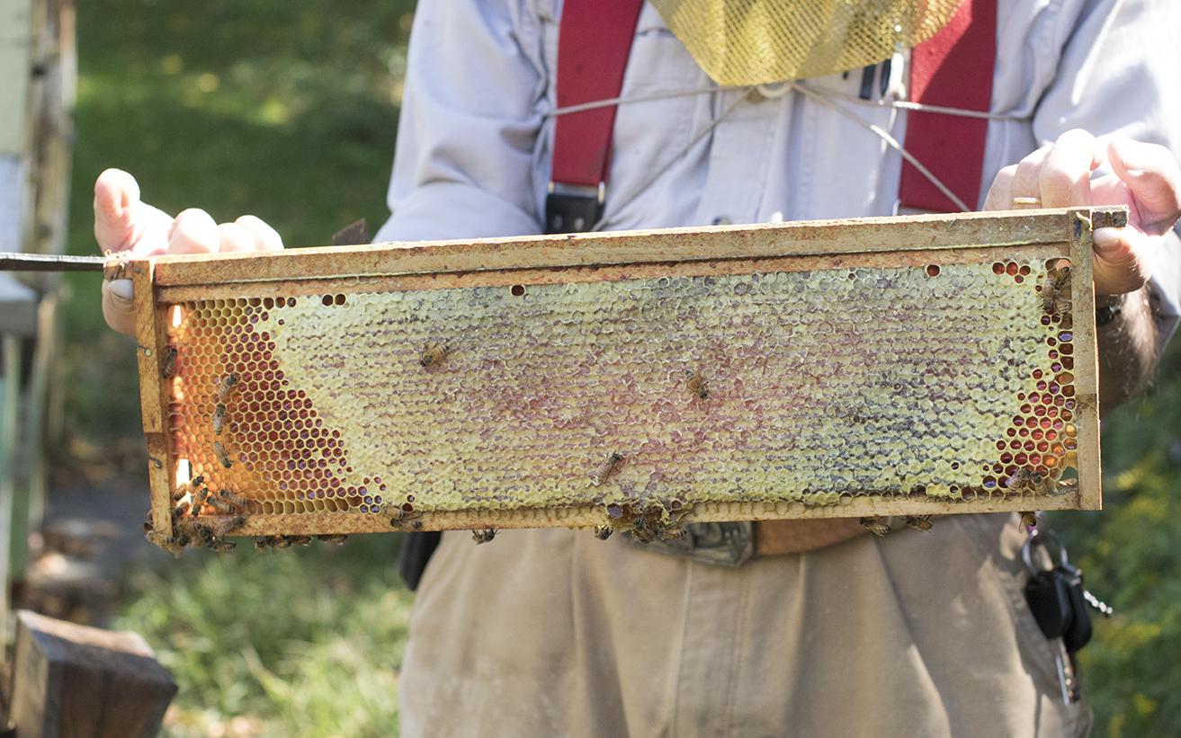 George holds up a honey super filled with honey and beeswax. (Jackson Mitchell)