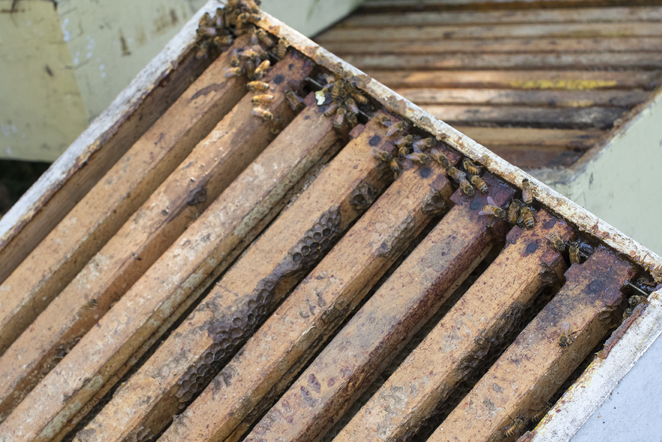 Honey bees are seen on the corners of honey supers at the bee yard in Chaplin, Connecticut. (Jackson Mitchell)