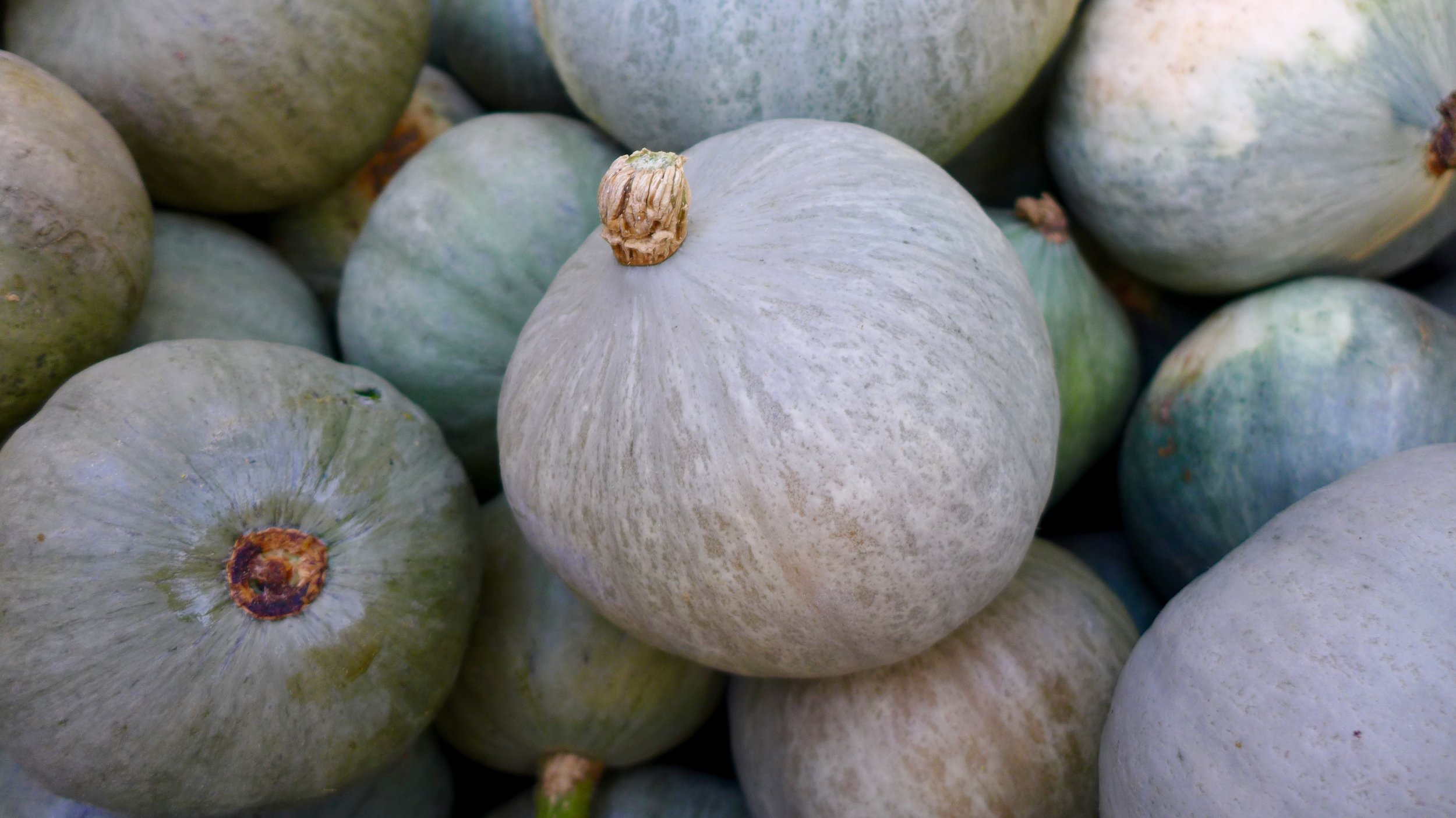 Thanksgiving Pre-Order - Order your veggie needs for pick-up at the Berkshire Grown Farmers' Market or our Farm Store!