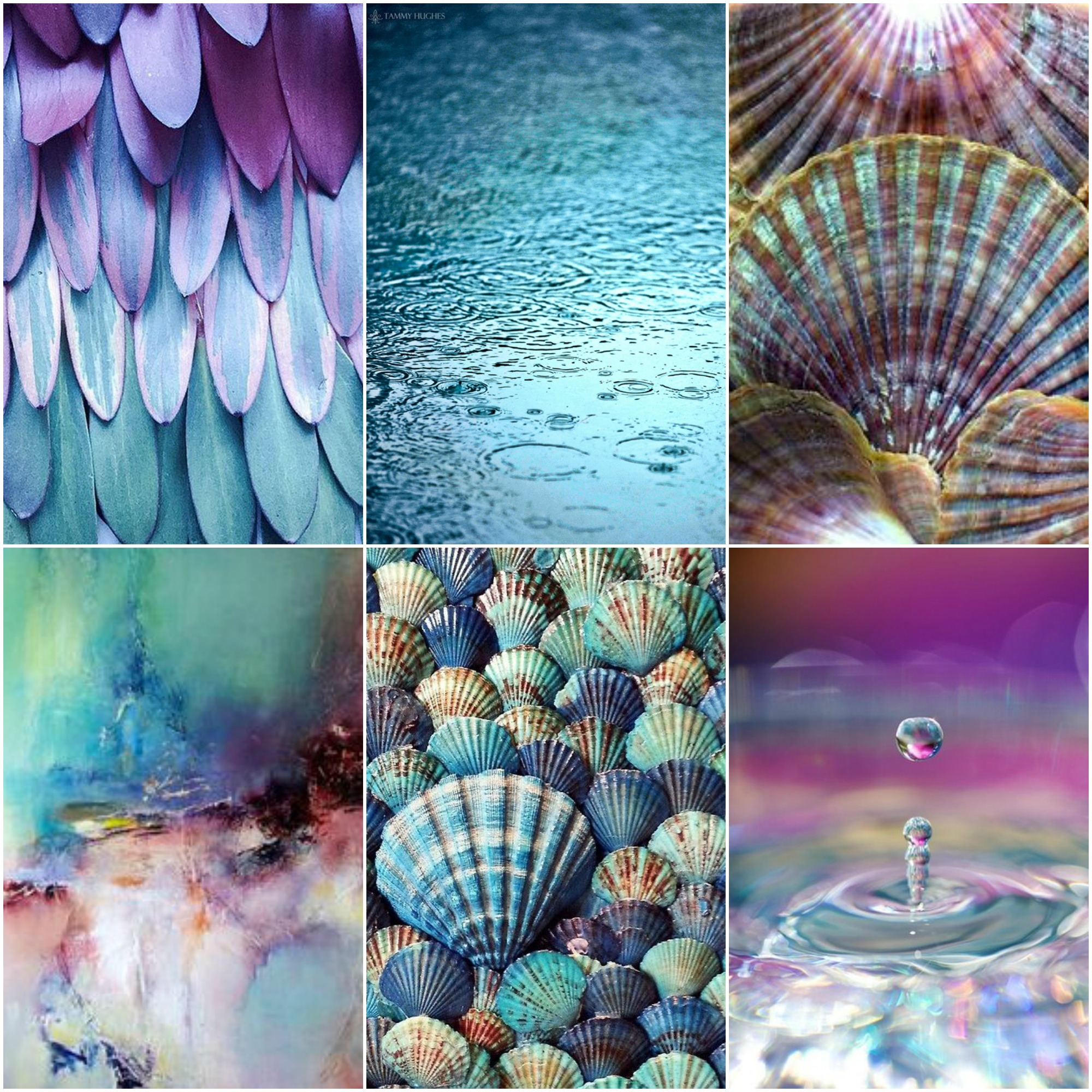 feathers ,  water , scallop shells , abstract art , blue shells ,  drop .