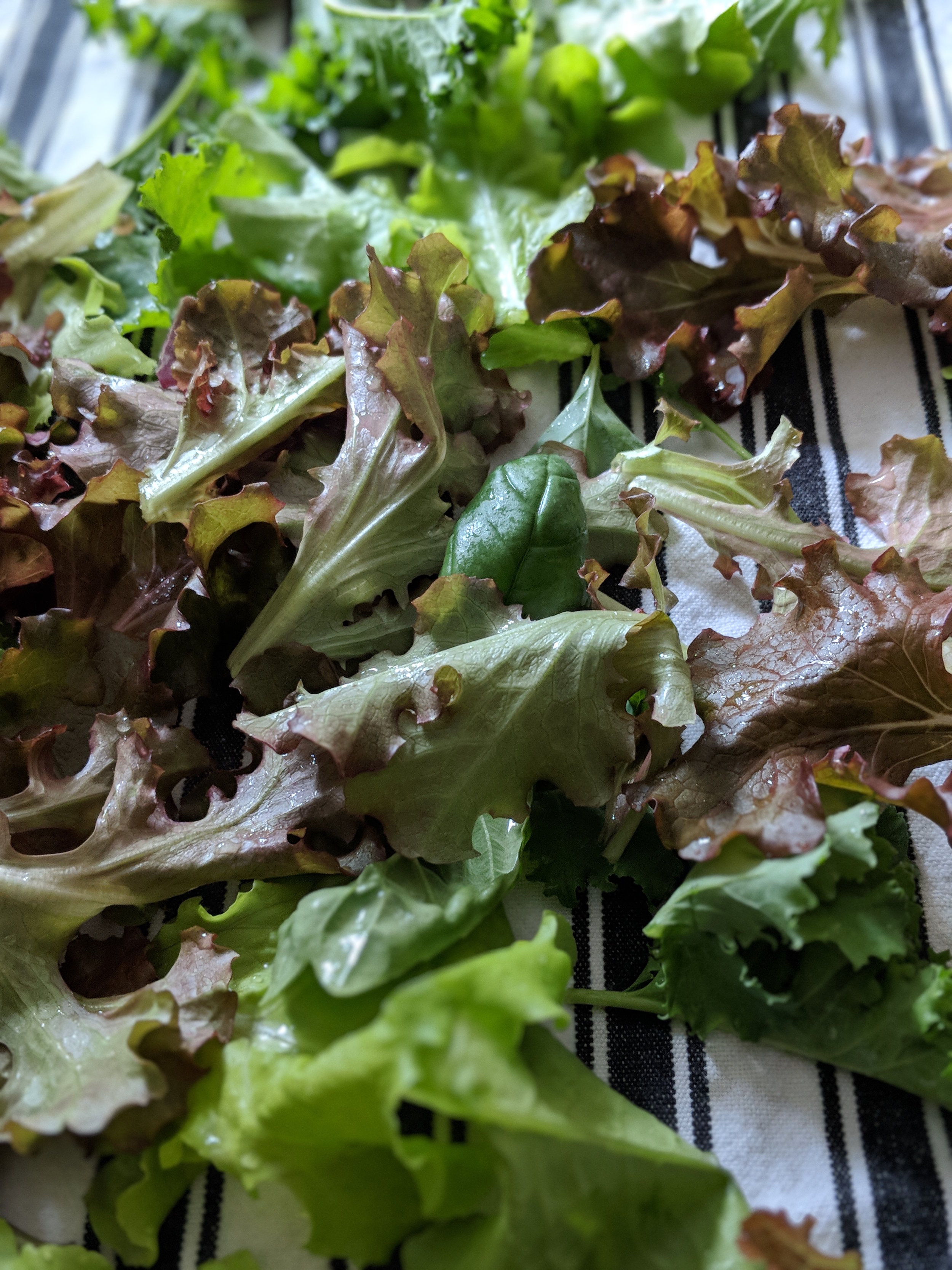 Greens from our own garden! I am NOT a green thumb, but I'm working on it because a salad made from the lettuce we grow is incredibly rewarding.