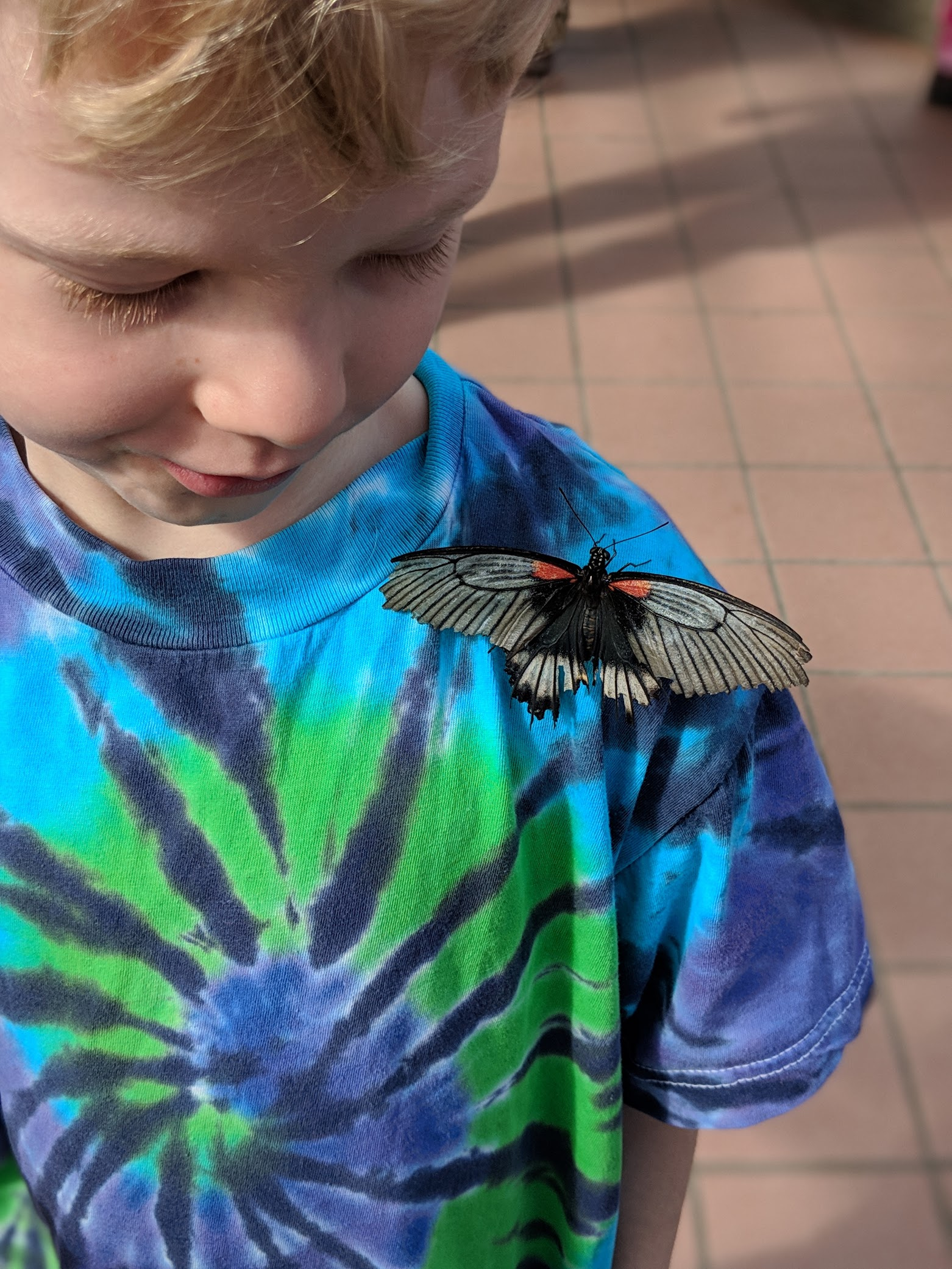 We went to the Botanical Gardens this week and enjoyed the Butterflies Go Free exhibit.