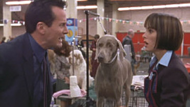 "A scene from ""Best in Show"". You should rewatch this movie. AND THEN GO GET BUSY BEE."