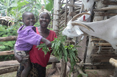 A Ugandan mother and son feed their family goat. Photo courtesy Heifer International.