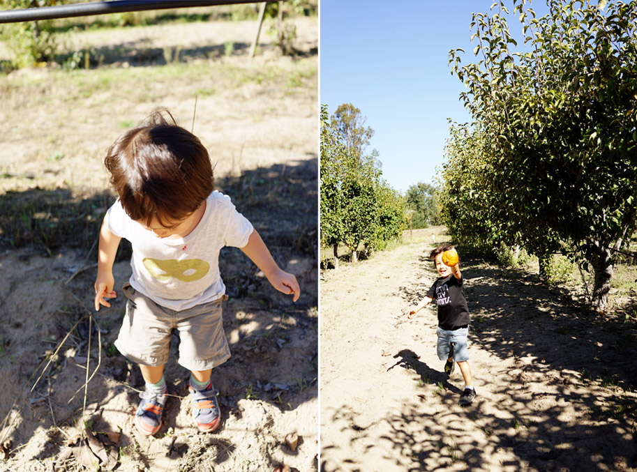 Apple Picking with Lucas and Theo / www.goodonpaperdesign.com/blog / @good_on_paper
