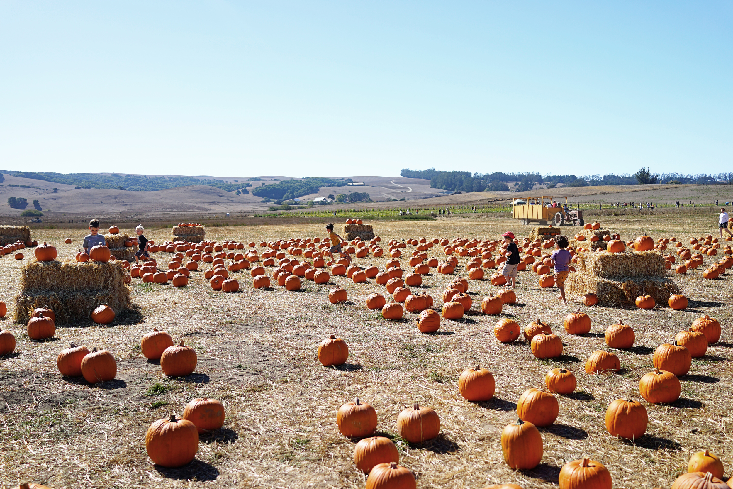 Happy Weekend: Pumpkin Patching in Petaluma  /  www.goodonpaperdesign.com/blog  /  @good_on_paper