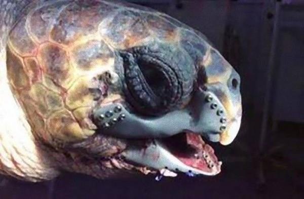 達億3D列印+海龜.jpg