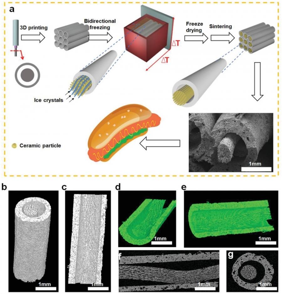 結合3D列印技術與冷凍澆注工法,實現具備對齊的層狀微結構的類熱狗骨骼支架(HD-AKT)。   Advanced Science