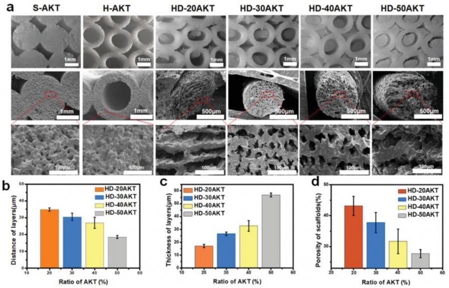 調整骨骼支架中類熱狗生物調料的比例(從20%到50%),獲得不同結構的熱狗樣支架,分別以HD-20AKT,HD-30AKT,HD-40AKT和HD-50AKT命名。  Advanced Science