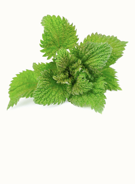 Nettle is rich in vitamin K and calcium that can help to increase milk production, while decreasing labor pains and postpartum bleeding.