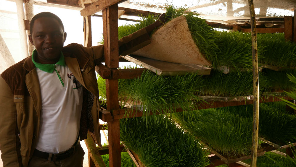 Hydroponics efficiently produces animal feeds.With a greenery of 8 by 4 meters, 10 cows are fed continuously.
